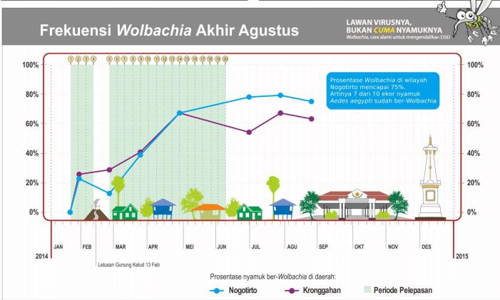 Grafik Persentase Nyamuk Aedes Aegypti ber-Wolbachia