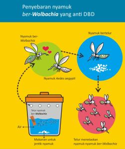 Proses Penyebaran Virus Wolbachia