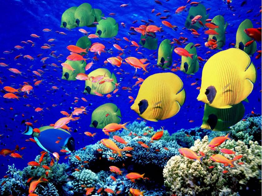 Gambar Pemandangan Bawah Laut